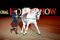 Andalusians-Olympia13kh_0630